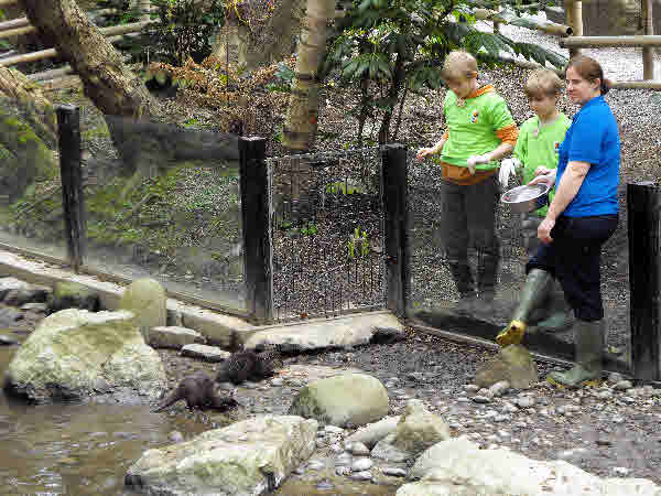 Boys Feeding The Otters